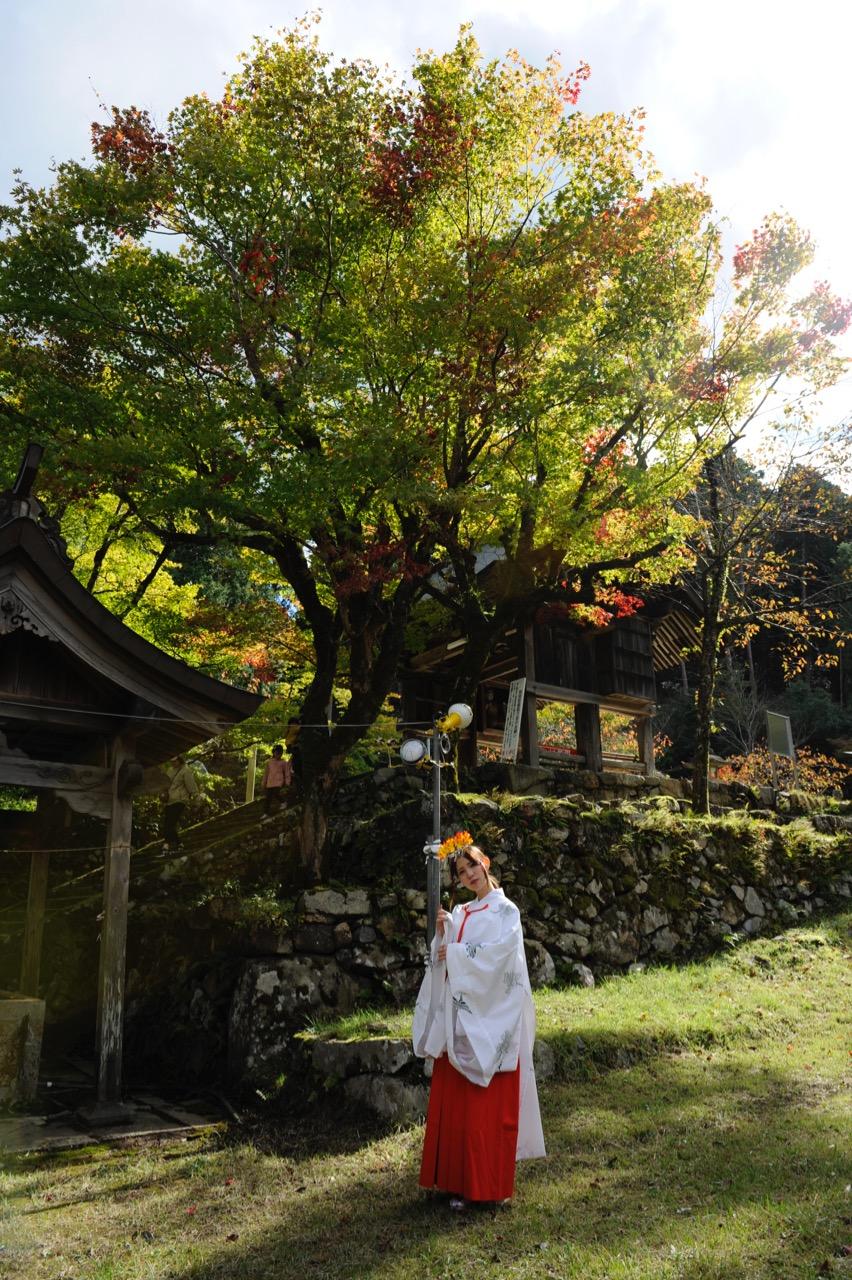 11月04日の養父神社の紅葉