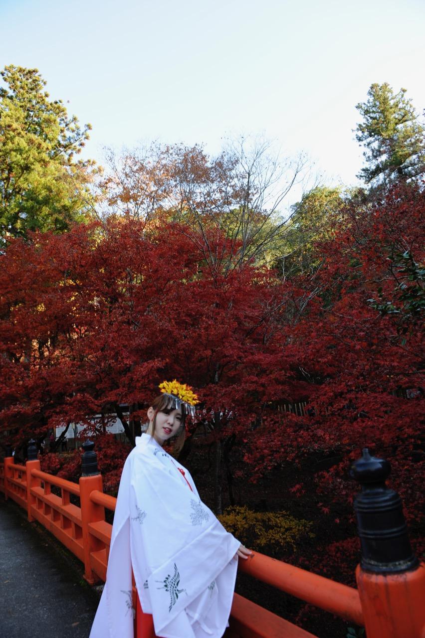 11月23日の養父神社の紅葉