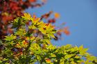 10月20日の養父神社の紅葉