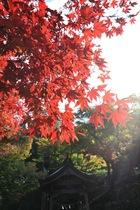 11月06日の養父神社の紅葉