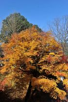 11月25日の養父神社の紅葉