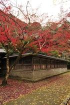 11月21日の養父神社の紅葉