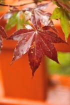 10月22日の養父神社の紅葉