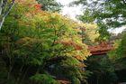 11月08日の養父神社の紅葉