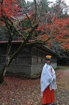 11月16日の養父神社の紅葉