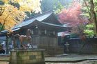 11月12日の養父神社の紅葉