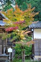 10月27日の養父神社の紅葉