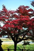 10月31日の養父神社の紅葉