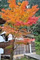 11月3日の養父神社の紅葉