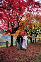 11月09日の養父神社の紅葉