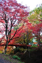 11月13日の養父神社の紅葉