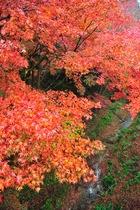 11月14日の養父神社の紅葉