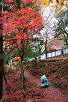 11月22日の養父神社の紅葉