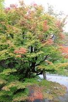 11月01日の養父神社の紅葉