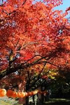 11月05日の養父神社の紅葉