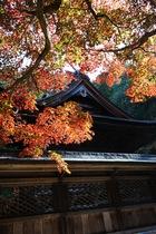 11月11日の養父神社の紅葉