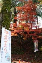 11月20日の養父神社の紅葉